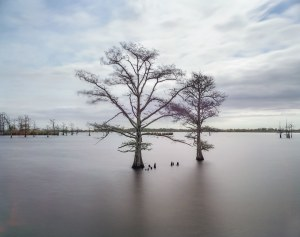 A photograph of two trees partially submerged by flood waters in Louisiana.